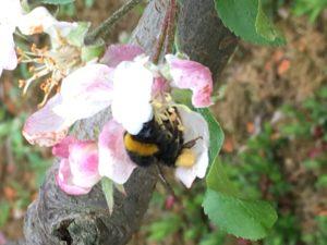 Bee 2 11-05-2017